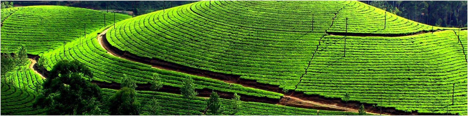 Kodaikanal - Tamil Nadu